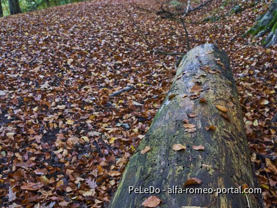 Herbst1