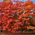 Herbst11