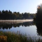 Morgentlicher Nebel über dem Birnbaumteich