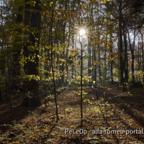 Herbst7